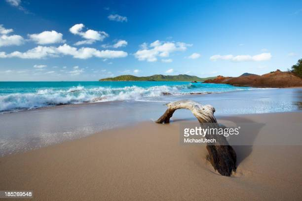 Driftwood am Strand am Karibischen Meer