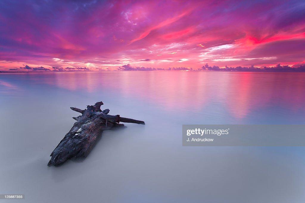 Driftwood on Maroma beach at sunrise