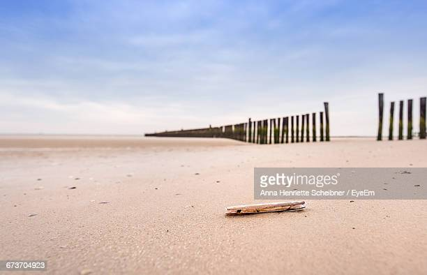 Driftwood On Sand At Beach Against Sky