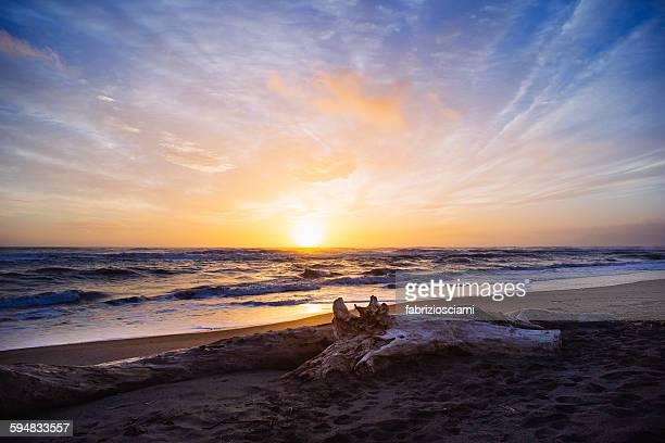 Driftwood on the beach at sunset, Pescia Romana, Lazio, Italy