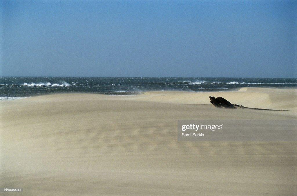 Driftwood on the Beach : Stock Photo