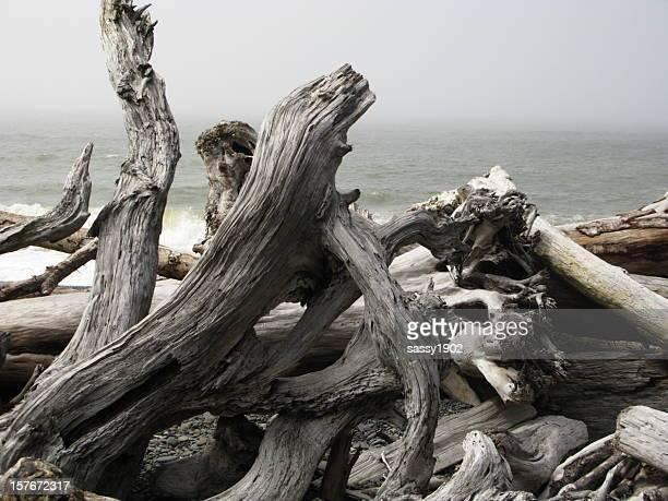 Driftwood Pacific Ocean Coast