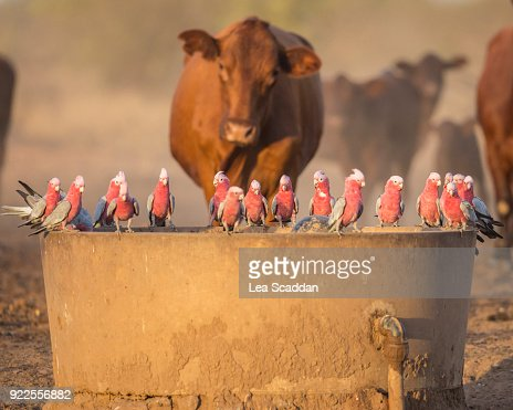 Drink at the Trough : Stock Photo