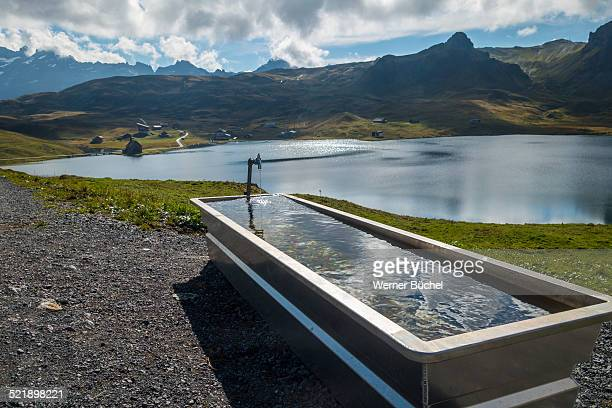Drinking trough and lake