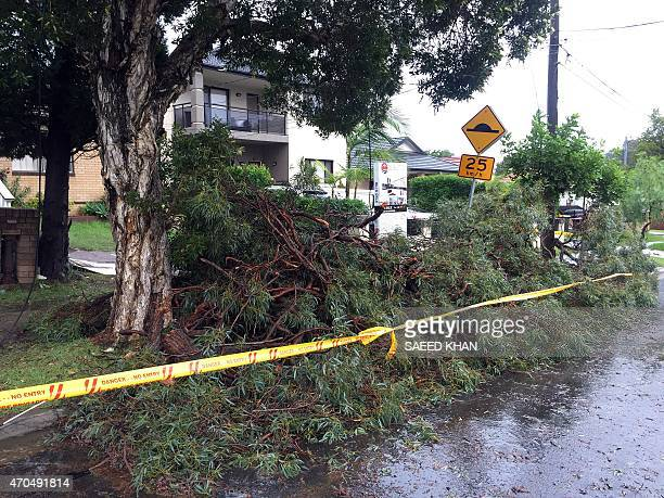 Drive ways block by the fallen trees in the residential area of the western Sydney following an over night strong storm on April 21 2015 Australia's...