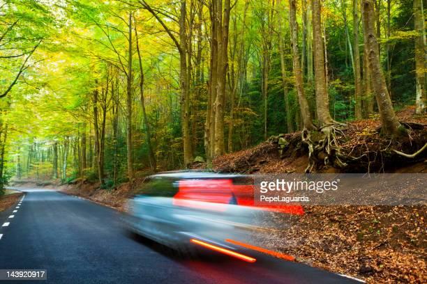 Conduite dans une superbe forêt.