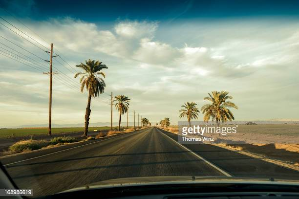 Driving on a Palm tree lined road