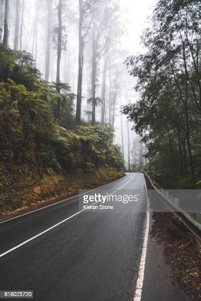 Driving through fog in the forest