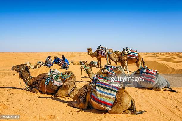 Dromedaries and camel driver relaxing in dunes of Sahara desert