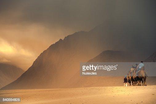 Dromedary Camels (camelus dromedaris) in desert