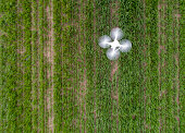 Top view of drone flying over green wheat field in spring. Technology innovation in agricultural industry