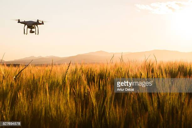 Drone flying over the wheat fields on springtime in the Catalan countryside with beautiful sunset light.