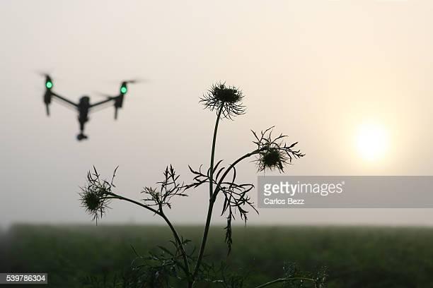 drone over plantation