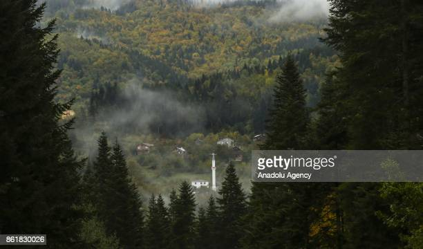 A drone photo shows an aerial view of a forest displaying autumnal colors during autumn in Turkey's Kastamonu on October 16 2017