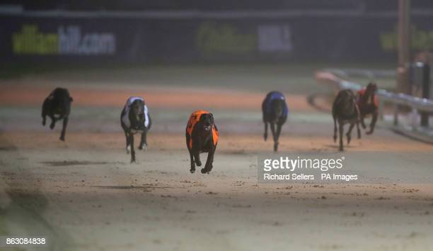Droopys Verve wins the second race at Newcastle during the William Hill All England Cup Festival at Newcastle Greyhound Stadium PRESS ASSOCIATION...