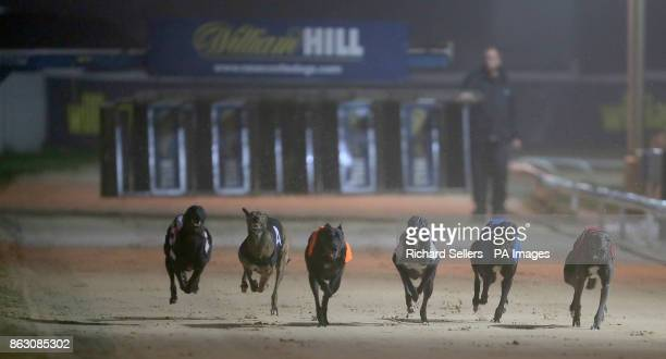 Droopys Verve wins the second race at Newcastle during the William Hill All England Cup Festival at Newcastle Greyhound Stadium
