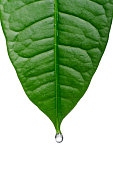 Drop hanging on plant
