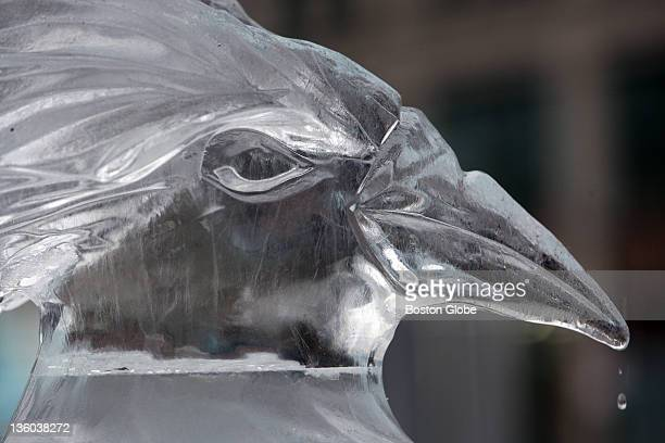 A drop of water falls from the beak of one of six Rockhopper penguins which have been sculpted in ice in front of the New England Aquarium for part...