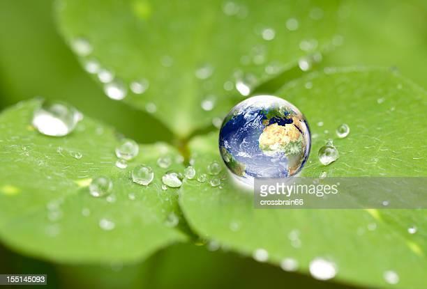 world globe in Wasser Tropfen auf dem cloverleaf