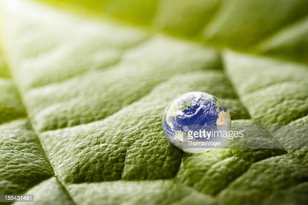 Drop auf Blatt Grün Natur-Umgebung