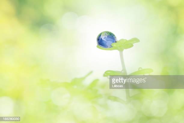 Mit Tropfenmuster von Wasser auf einer Pflanze