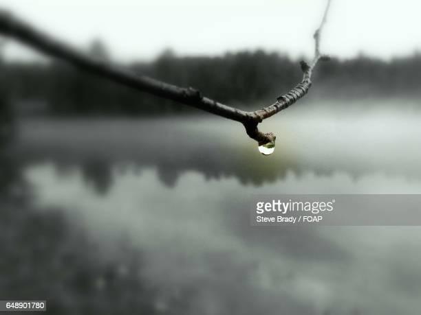Droplet on twig