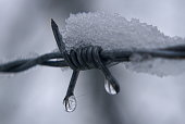 Shiny dew drops and white snow on barbed wire