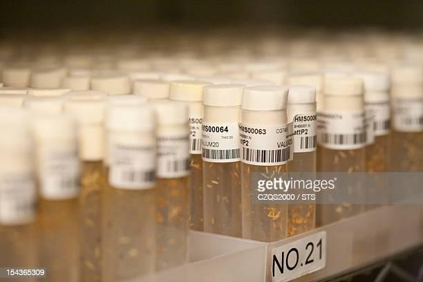 Drosophila melanogaster laboratory