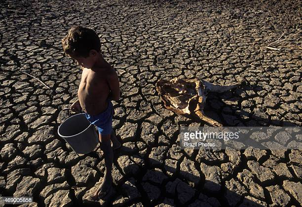 Drought poor child holds a bucket in a dry dam dead cattle on cracked soil Northeastern Brazil