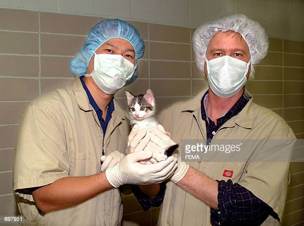 Drs Mark Westhusin and Tae Young of the College of Veterinary Medicine at Texas AM University hold the first successfully cloned cat named 'copycat'...