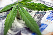 Business in cannabis