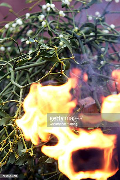 Druids bless this years crop of mistletoe with fire and annoint it with mead at Tenbury Wells Market on December 6 Tenbury Wells England Ancient...