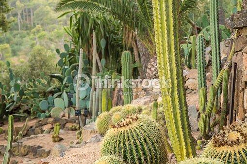Seco Y Verde Paisaje Cactus Al Jardin Foto De Stock Thinkstock - Cactus-seco