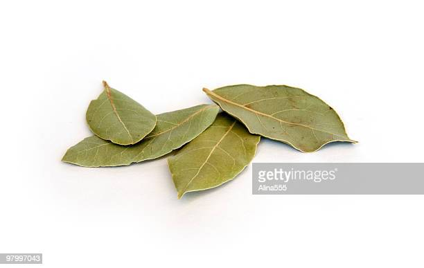 Dry bay leaves on white