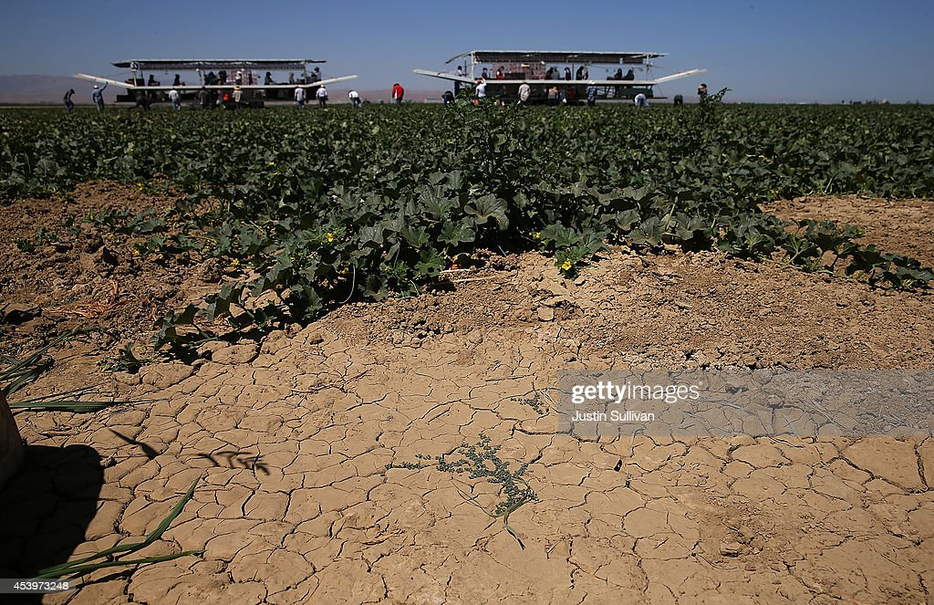 Dry cracked earth is visible on a cantaloupe farm on August 22 2014 near Firebaugh California As the severe California drought continues for a third...