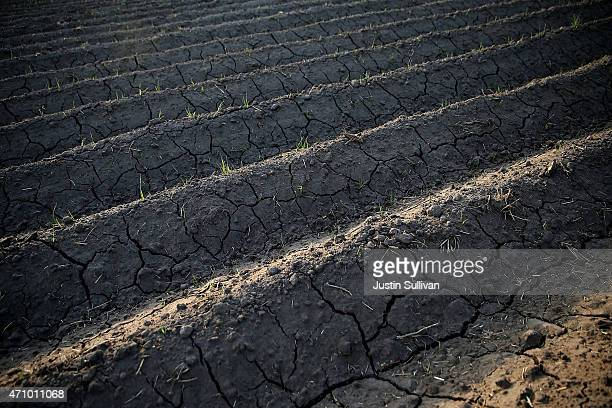 Dry cracked earth is visible on a fallow field on April 24 2015 in Tulare California As California enters its fourth year of severe drought farmers...