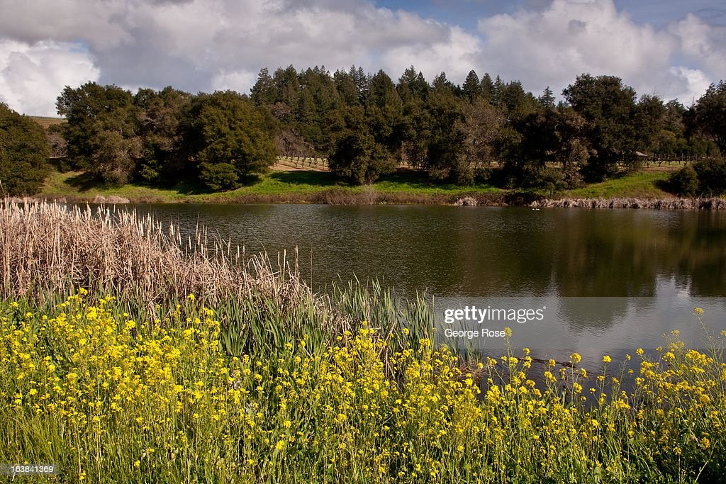A Dry Creek Valley vineyard irrigation pond is viewed on March 6, 2013, near Healdsburg, California. Sonoma County, along with Napa Valley, has grown to become one of California's most prestigious wine grape growing regions and known for its cool climate pinot noir and chardonnay.