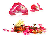 geranium, petunia, dry delicate flowers, leaves and petals of pressed, iris, rose, marigolds, Aquilegia pelargonium, isolated on white background scrapbook