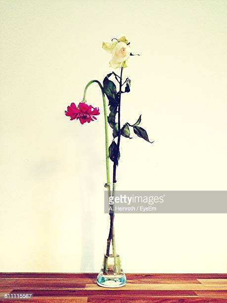 Dry flowers on table against white wall