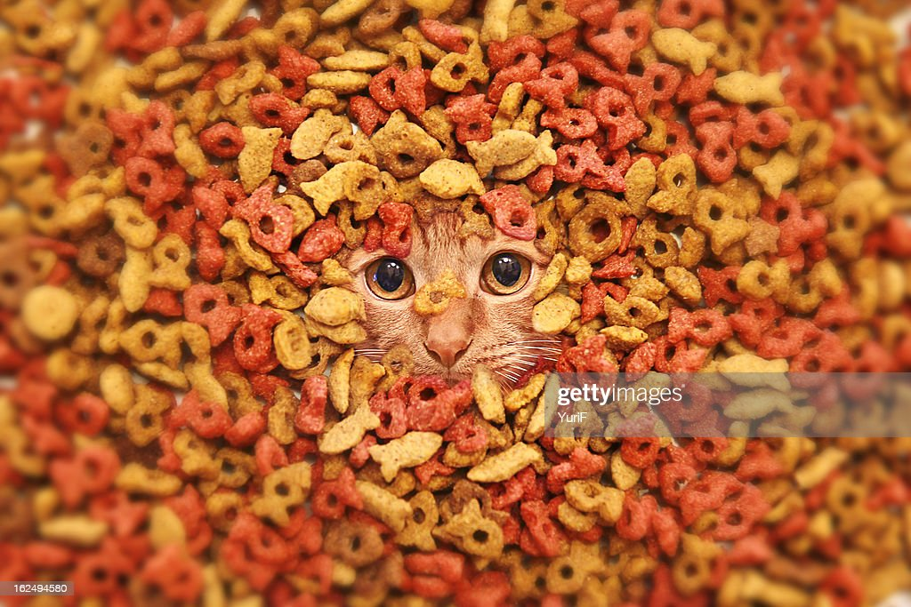Dry food and a cat. : Stock Photo
