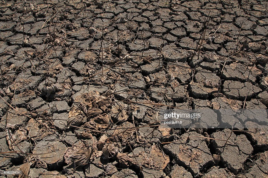 Dry Ground Texture, Drought, the ground cracks, no hot water : Bildbanksbilder
