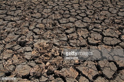 Dry Ground Texture, Drought, the ground cracks, no hot water : Stockfoto