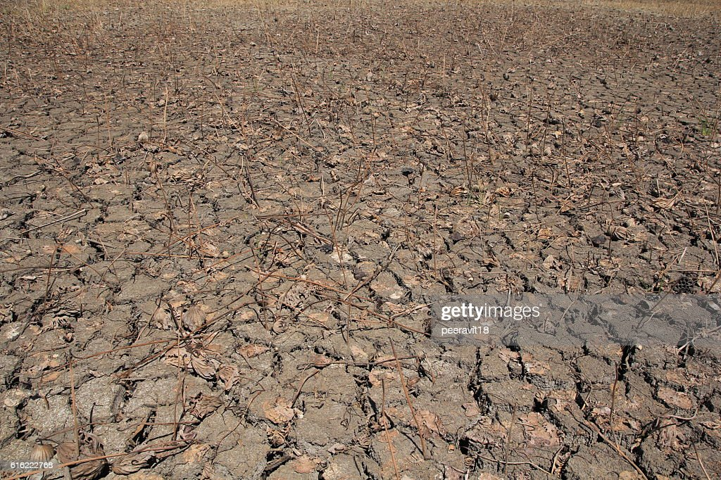 Dry Ground Texture, Drought, the ground cracks, no hot water : Stock-Foto