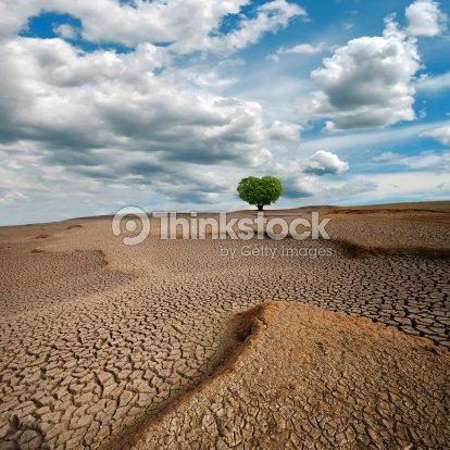 Dry lake bed,Heart-shaped tree : Stock Photo