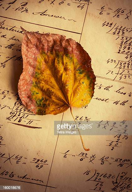 Dry leaf on antique notebook with numbers