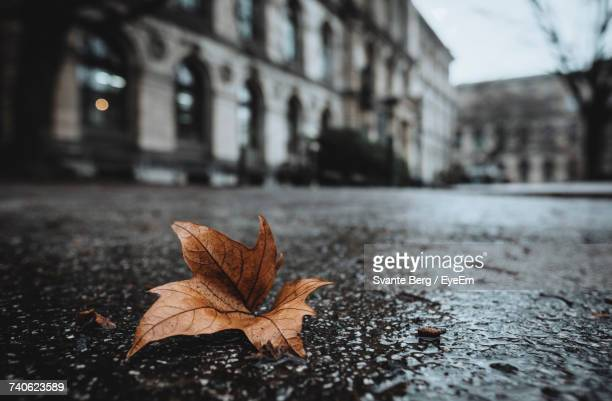 Dry Leaf On Wet Street In City
