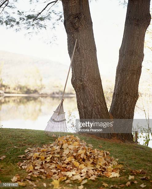 Dry leaves in pile, rake leaning against tree, river in background