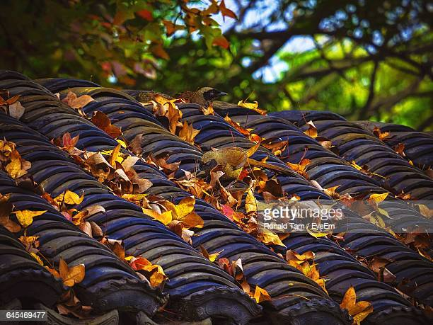 Dry Leaves On Roof