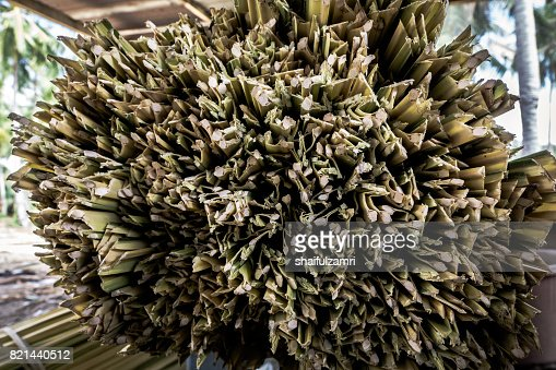 Dry nipa (or nypa) palm leaves for making traditional rolling cigarette in Kelantan. Smoker will add tobacco later for rolling cigarette. : Stock Photo