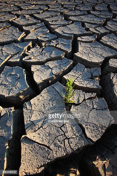 Dry out ground near rodes city on July 16 2009 in Rhodes Greece Rhodes is the largest of the Greek Dodecanes Islands Due to climate change and global...